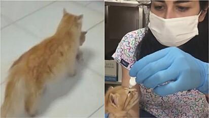 Na Turquia uma gata leva seus filhotes a uma clínica veterinária para pedir ajuda médica para um deles que estava com infecção nos olhos.
