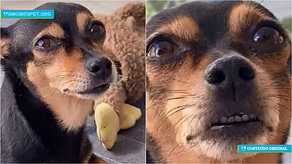 A influenciadora pet Maria Bica em seu Instagram lista as raças de cachorros em seis vídeos com comentários hilários.
