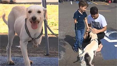 Garoto adota cachorro com a mesma condição física em Londrina, Paraná.