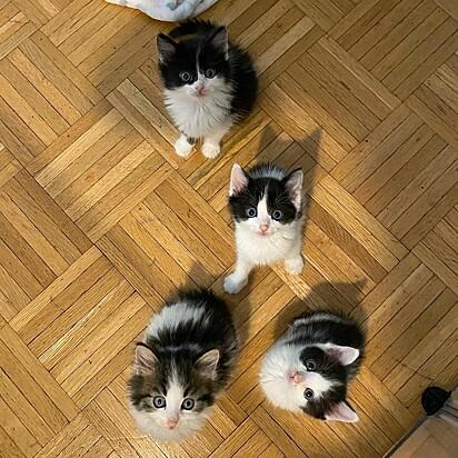 Os gatinhos foram nomeados Peanut, Hazelnut, Cashew e Pistachio.