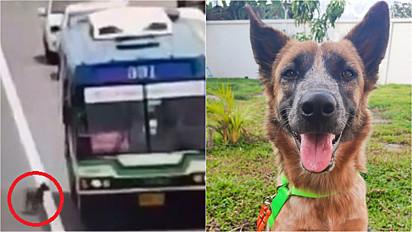 Cão desaparecido é resgatado por motorista de ônibus em rodovia de Bangkok, Tailândia.