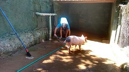 Gabriel chegou aos cuidados do protetor ainda filhote e sempre gostou de banhos.