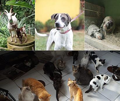 Esses são alguns dos 200 animais que o Marcelinho Protetor cuida.