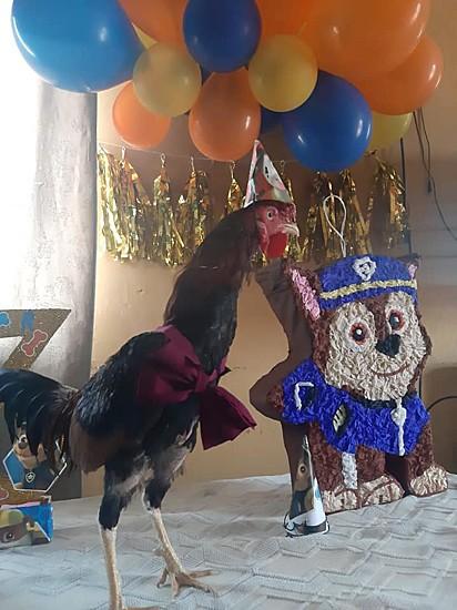 Entre os convidados, esteve presente a galinha que pertence a uma das filhas de dona Maria.