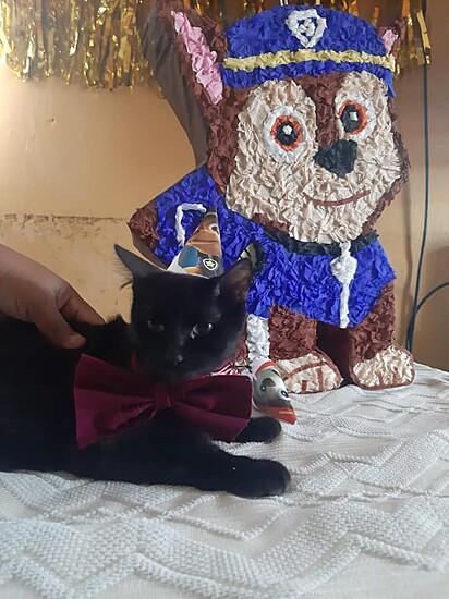 O gatinho preto também marcou presença na comemoração.