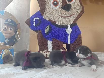 E esses gatinhos fofos? Também participaram da festinha!