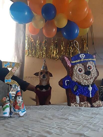 O cãozinho Roky ganhou uma festa de aniversário e contou com a participação de convidados especiais.