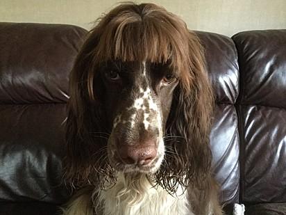 Esse também não está feliz com o seu penteado.