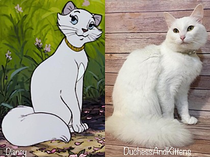 A gatinha Duquesa.