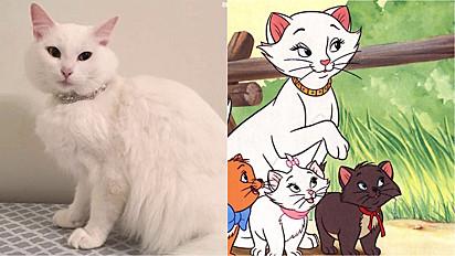 Gatinha resgatada em péssimas condições, dá à luz quatro gatinhos lindos e a família felina é comparada com o filme 'Aristogatas' da Disney.