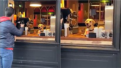 Labrador é visto servindo cerveja num pub em Cork, na Irlanda.