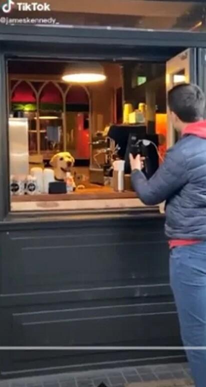O labrador Eddie é visto atendendo clientes em pub irlandês.