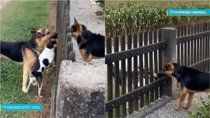 Pastor alemão foge de casa, dono vai no centro da cidade à procura do cão e volta com um impostor para casa.