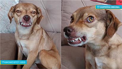 Cachorro sorri quando escuta seu nome.