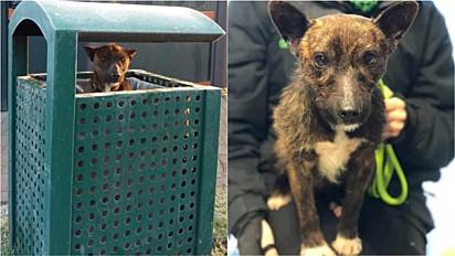 Cachorro é encontrado em lixeira para se proteger do frio de Birmingham, Inglaterra.