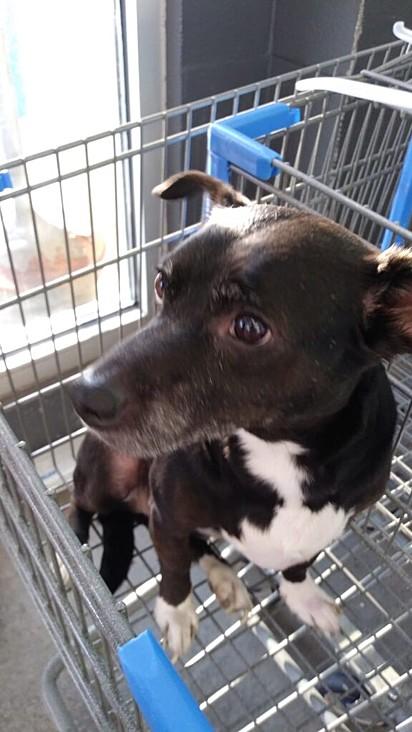 Foto publicada no Facebook para encontrar o paradeiro do dono do cachorro.