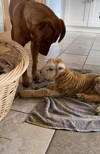 Desde que Ronnie foi levado para a residência da família, Lola não saiu do seu lado.