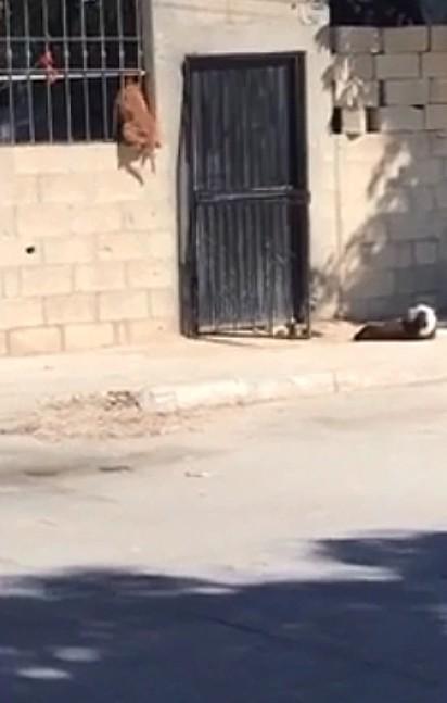 O flagra hilário do cão pulando o muro para entrar em casa foi filmado e compartilhado no TikTok.