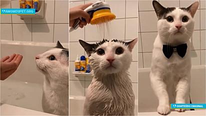 O gatinho Twiniboo é apaixonado por banhos e se comporta de maneira exemplar.