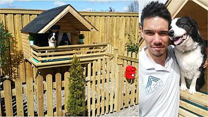 Aproveitando o descanso das férias homem decide construir uma casa para a sua cadela border collie.