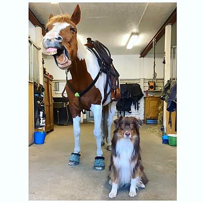 O cão Orion com a sua amiga Destiny.