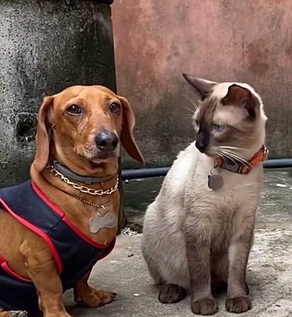 O cachorrinho Malcolm e o felino Ozzy disputaram uma batalha de rima entre pets.