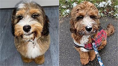 O cãozinho que vive em Londres, Inglaterra, tem chamado a atenção das pessoas por ter cílios super longos.