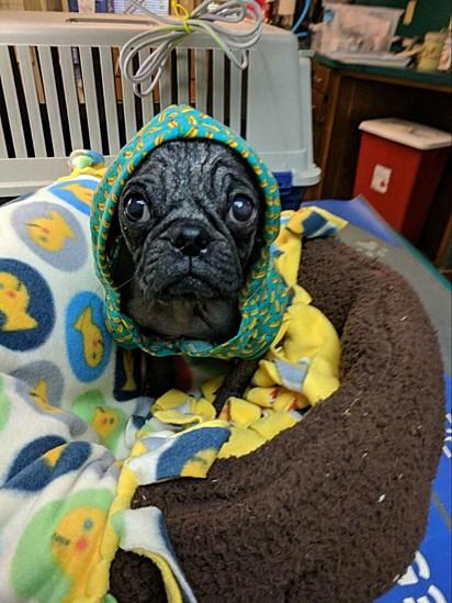 Foi com roupinhas e tecidos de lãs que ele começou a se sentir confortável no abrigo.