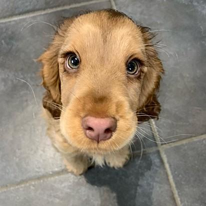 Encantada com o seu olhar.