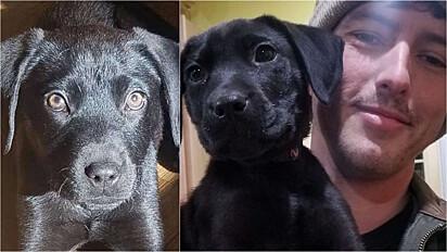 Labrador surdo é adotado por homem com a mesma deficiência.