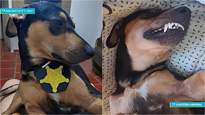 Ao perseguir casal na saída do mercado, cão é resgatado, adotado e agora é muito amado.