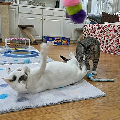 A gata Canasta com o felino Charlie.