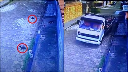 Caminhoneiro quase atropela dois gatinhos na quarta-feira, 7, no bairro Suarão, em Itanhaém (SP).