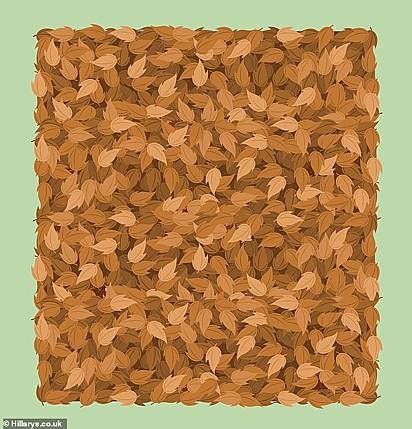 Desafio: encontrar seis ouriços em meio as folhas de outono.