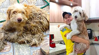 Cadelinha é encontrada em péssimas condições nas ruas de Cidreira, RS, é resgatada e ganha nova vida.