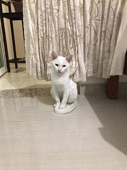 Agora o gatinho Tonico tem um lar.