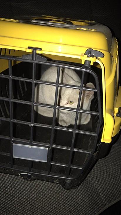 O gato foi resgatado com a caixa transportadora da gatinha Gleissi.