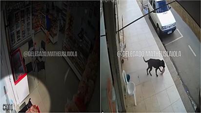 Cão é flagrado roubando pacote de pão em Marilândia, Espirito Santo.