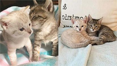 Gatinhos são resgatados das ruas de Maryland (EUA) e agora não se separam por nenhum momento.