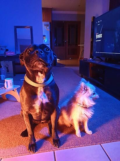 A duplinha Jessie e Chuck.