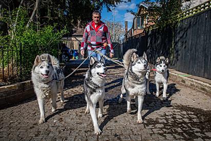 Andy e os cães são reconhecidos quando caminham pelas ruas da cidade.