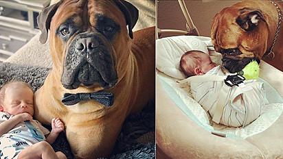 Conheça Brutus, o cachorro que entrega seu brinquedo favorito para bebê quando ele chora.