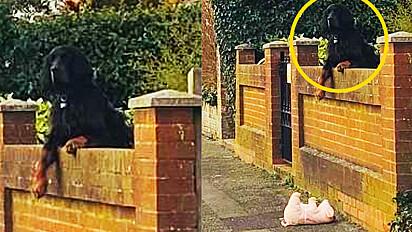Cão derruba seu porquinho de pelúcia em calçada e motorista para ajudar