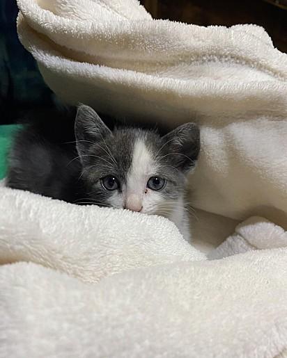 A gatinha Mia Marquezine Celulari.