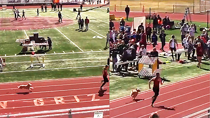 Cachorro invade pista de corrida e, por um segundo, não bate recorde de Usain Bolt.