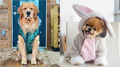 Pet influencer: cães que faturam no TikTok com os seu vídeos fofos.