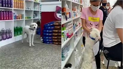 Cachorro visita obra de uma clínica veterinária e posteriormente é resgatado pela mesma no Rio de Janeiro.