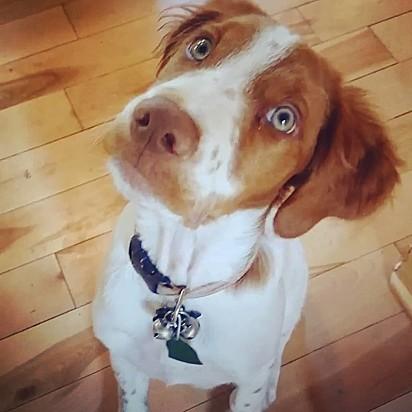 O cachorrinho Dexter, 6 anos.