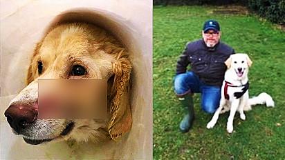 Cachorrinho vítima de maus-tratos recebe segunda chance de ser feliz.