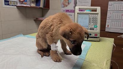 O filhote ficou sob os cuidados da clínica.